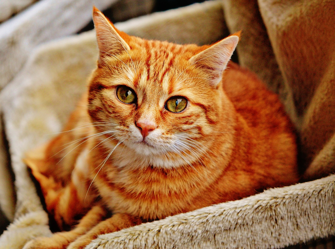 Best Places to Keep a Litter Box in an Apartment