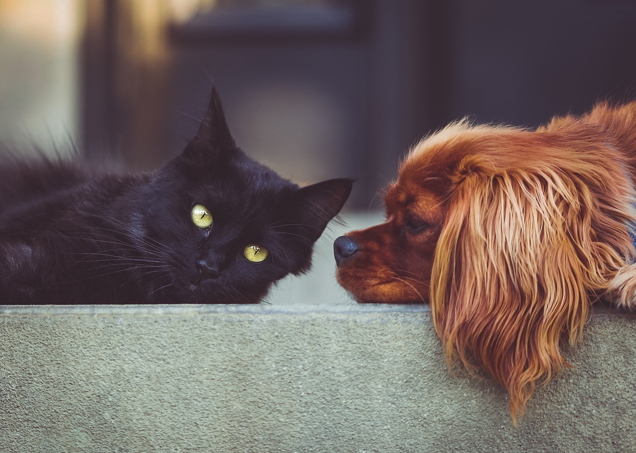 4 Tips for Having a Pet in an Apartment
