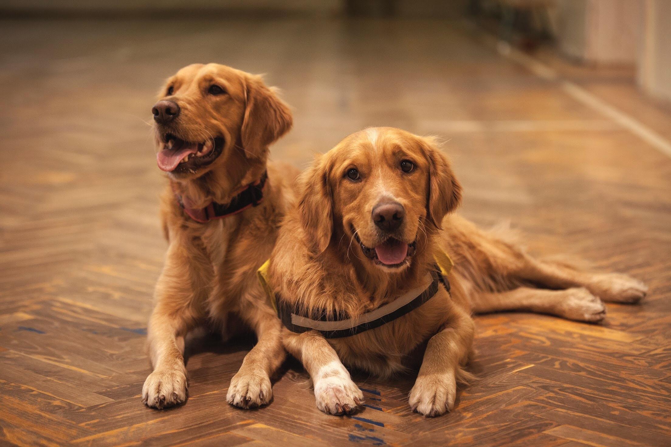Fairway 28 Blog | Bridgewater, New Jersey Apartments | pet-friendly ...